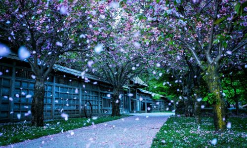 Free Download Spring Season Desktop Wallpaper Widescreen